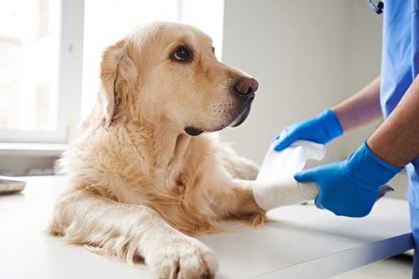 Veterinary Compounding in Pennsylvania